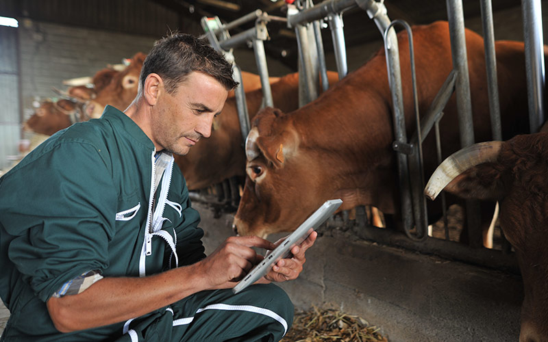 Equine Identification and Registration System